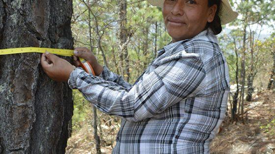 Aprender a conservar los bosques nos ha traído beneficios
