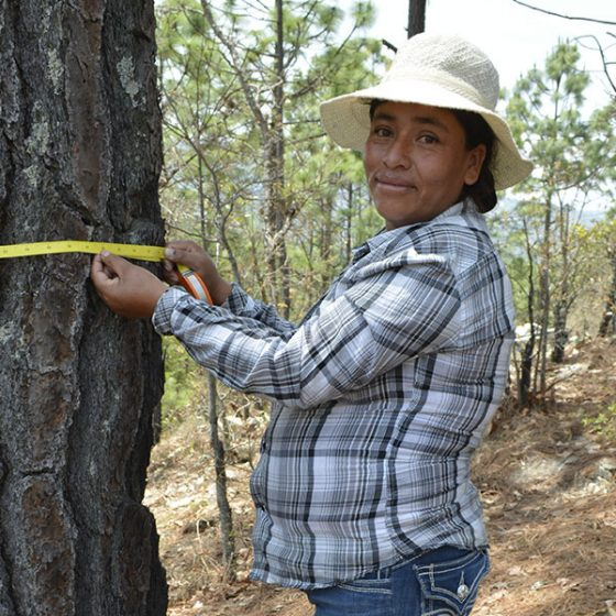 Learning to conserve the forest has been beneficial to us